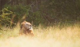 ÉCOTOURISME EN <br> AFRIQUE DU SUD