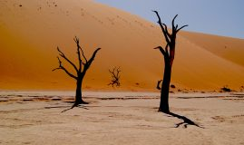 L'ESSENTIEL DE LA NAMIBIE
